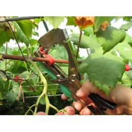 Aparat de legat via vita de vie, aparat de palisat plante